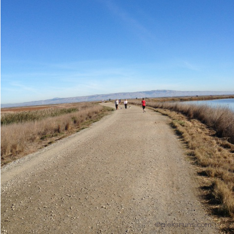 Marsh Madness Half Marathon Recap